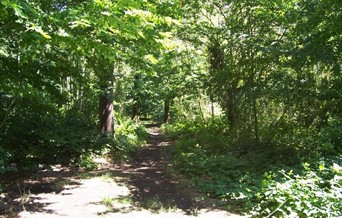 Belfairs Woodland Nature Discovery Park