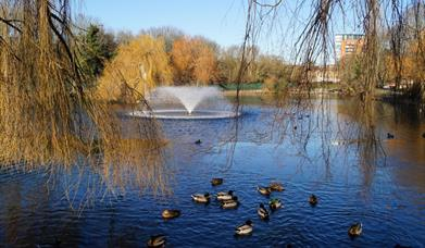 Central Park in Chelmsford pond with ducks